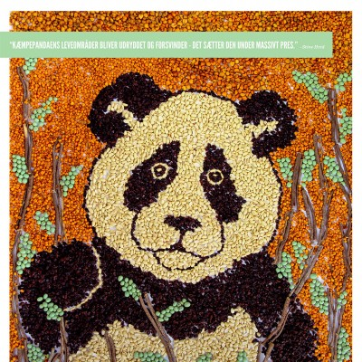 Panda art made of natural products